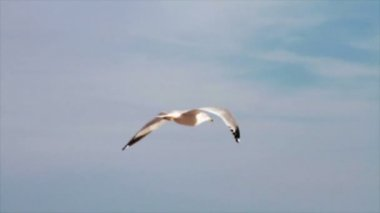 Seagull Flying By Ocean — Stockvideo