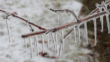 Ice Storm, Icing On Tree, Icicle — Stock Video
