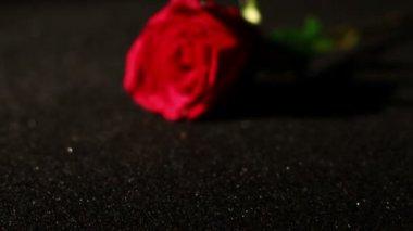 Roses Falling — Stock Video