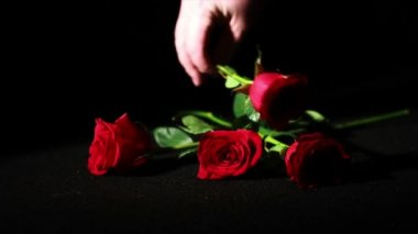 Hand take roses — Stock Video