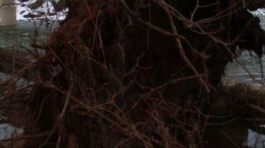 Tree Fallen Down in River — Stok video