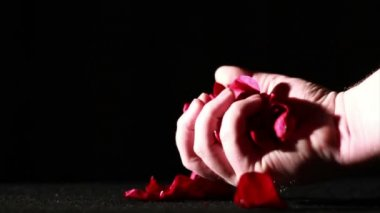 Rose Petals on Ground Being Crushed — Wideo stockowe