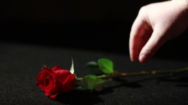 Hand take rose — Stock Video
