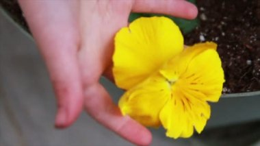 Yellow Flower being Held by Child — Stock Video