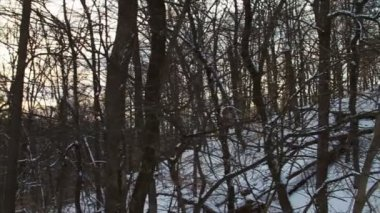 Fresh Snow in the Forest — Stock Video