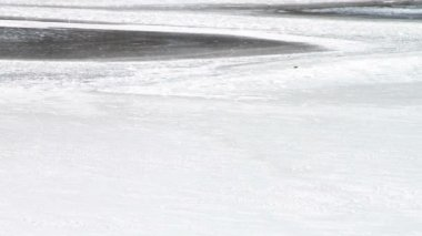Thin Melting Ice on Pond — Wideo stockowe