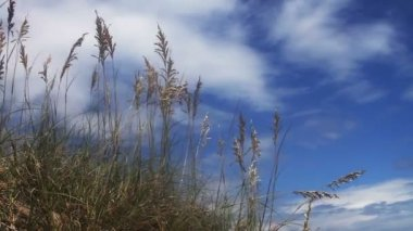 Beach with Long Grass — Stock Video