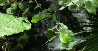 Waterfall in the Tropics — Wideo stockowe
