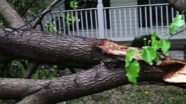 Big fallen tree — Vídeo de stock