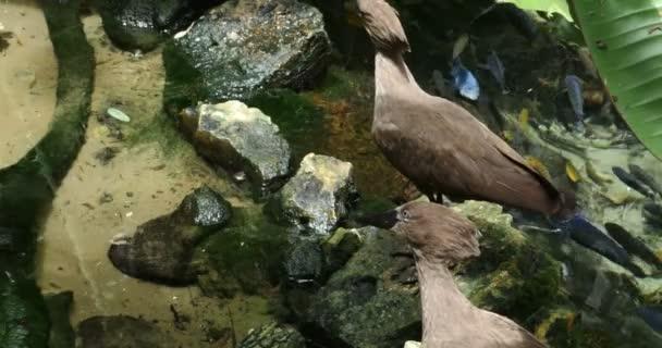 Hermosas aves tropicales — Vídeo de stock