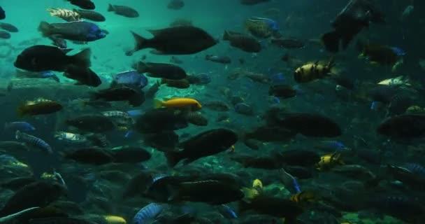 Peces colorido — Vídeo de stock