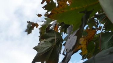 Leaves Blowing in Wind — Wideo stockowe