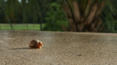 Snail crawling on ledge — Stock Video