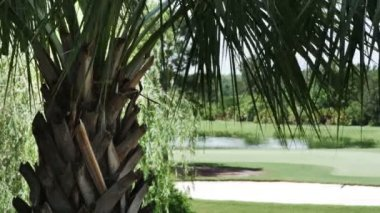 Palm Trees with Golf Course — Vídeo de stock