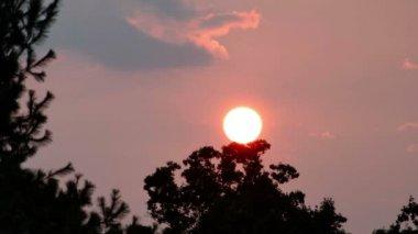 Sun Setting Behind Trees — Stock Video