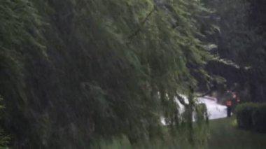 Heavy rain storm — Stock Video