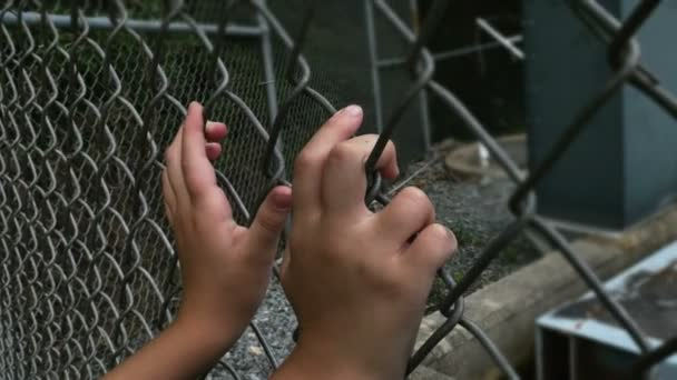 Holding Barbed Wire Fence — Vidéo