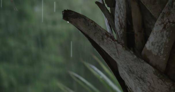Tormenta de lluvia — Vídeo de stock