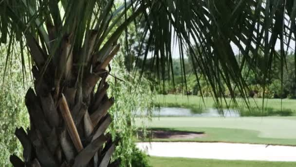 Palm Trees with Golf Course — Vidéo