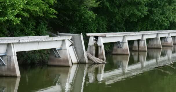 Puente dañado por árbol — Vídeo de stock