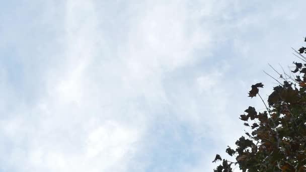 Leaves Falling During Fall — Vidéo