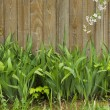Green grass on a background of wooden fence — Stock Photo #72936655