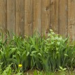 Green grass on a background of wooden fence — Stock Photo #72936645