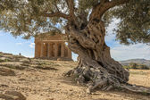 Agrigento - Valle dei templi — Stok fotoğraf