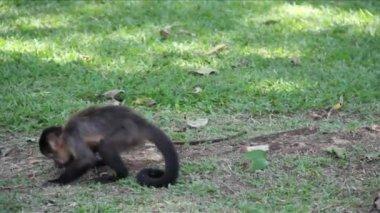 Monkeys in the jungle — Vídeo de Stock