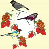 Bird's pattern — Stock Vector