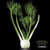 Fennel — Stock Vector