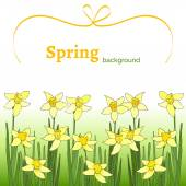 Spring background with yellow narcissus — Stock Vector