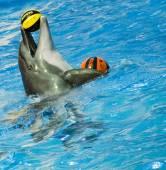 Wild dolphins — Stock Photo
