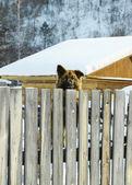 A big dog — Stock Photo