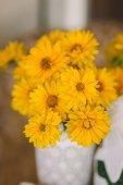 Camomiles amarillos — Foto de Stock
