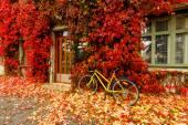 Colors of autumn. — Stock Photo
