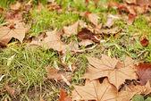 осень-здесь — Стоковое фото
