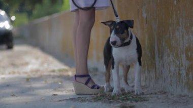 Английский бультерьер щенка с красивой молодой женщины. — Стоковое видео