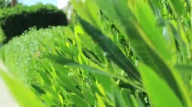 Egyptian green plants — Stock Video