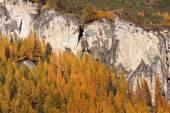 Autumn trees in the mountains — Stock Photo
