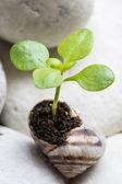The second life of snail shell — Zdjęcie stockowe