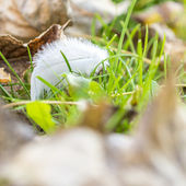 White feather on green grass in autumn — Foto Stock