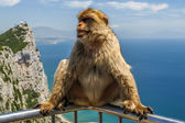 View of monkey on a balustrade of the building on the mountain, gibraltar — Stockfoto