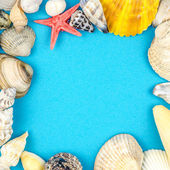 Abstract background made of shells blue background — Stock Photo