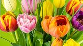 Multicolored tulips on green background — Φωτογραφία Αρχείου