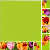Collage of tulips on green background on white ceramic mosaic tile — Stock Photo