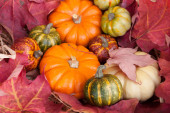 Small decorative pumpkins lie on red maple leaves — Stok fotoğraf