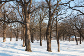 Empty park at winter time — Stock Photo