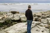 Man looks at resting fur seals, Kaikoura, New Zealand — Stock Photo