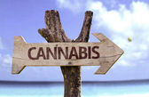 Cannabis wooden sign — Stock Photo